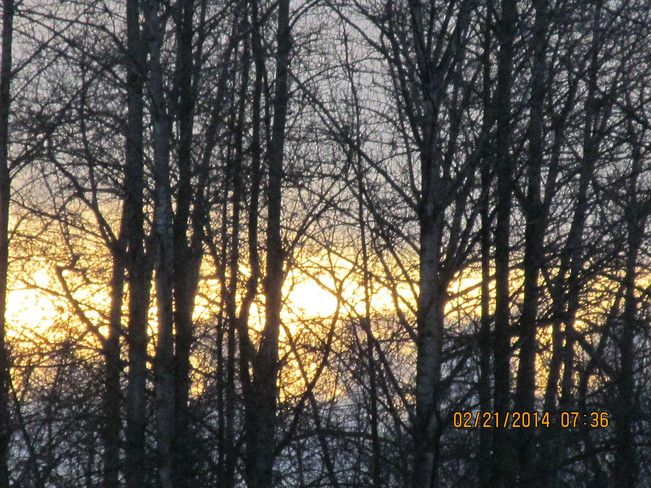 Sunrise through the forest Cloverdale, British Columbia Canada