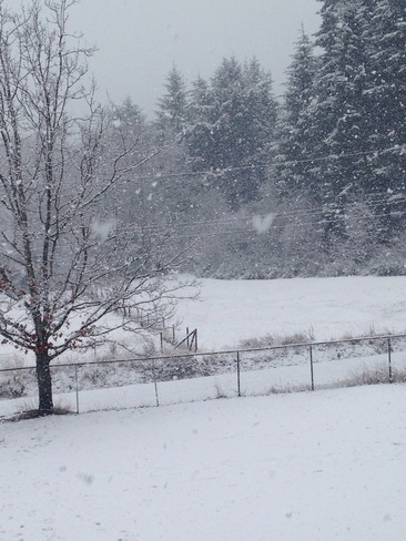 snow fall Port Alberni, British Columbia Canada