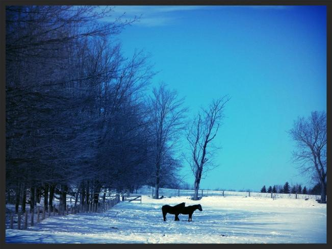 enjoy winter... Hamilton, Ontario Canada