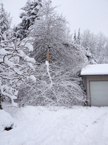 damaging snow Campbell River, British Columbia Canada