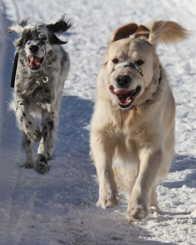 Happy dogs :-) Brighton, Ontario Canada