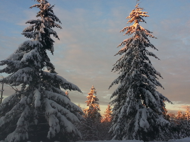 snow tree's Burnaby, British Columbia Canada
