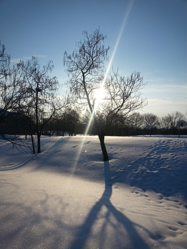 Ray of Sun on Snow Richmond Hill, Ontario Canada