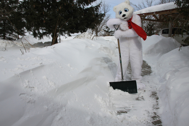 If it is polar Bear day how come I have to clean the walk Fergus, Ontario Canada