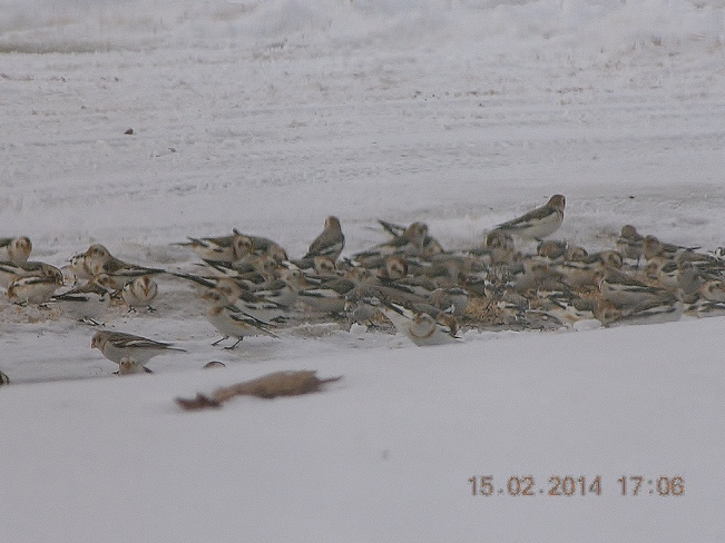 Moms snow birds having lunch Salisbury, New Brunswick Canada
