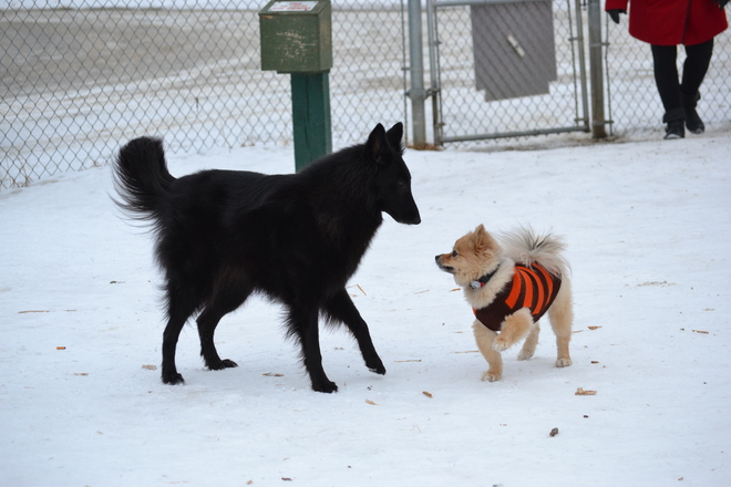 Dog Park Hokey Pokey High River, Alberta Canada