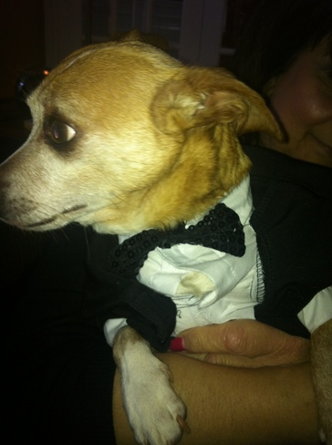 Tuxed up and ready for The Oscars!! Ottawa, Ontario Canada