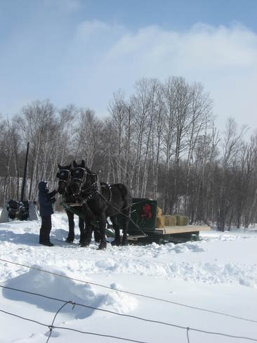 Weekend Sleigh Ride Thunder Bay, Ontario Canada
