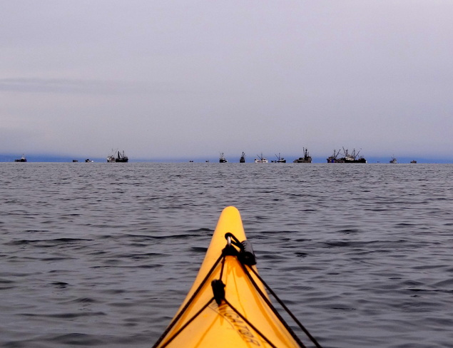 Kayaking out to see the herring fleet Royston, British Columbia Canada