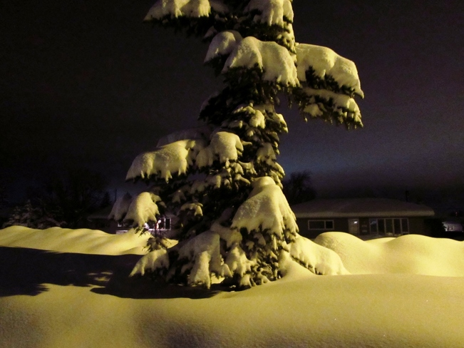snow on tree Dawson Creek, British Columbia Canada