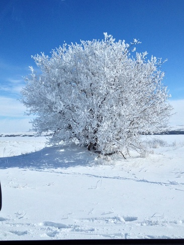 winter beauty Shields, Saskatchewan Canada