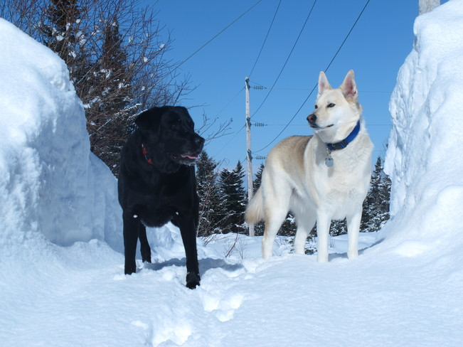 Jersey and Bandit best buds Deer Lake, Newfoundland and Labrador Canada