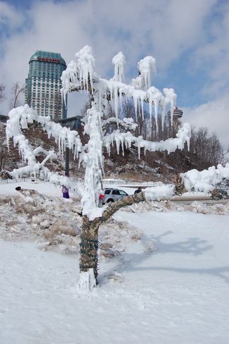 Niagara - Tree with Icicles Niagara Falls, Ontario Canada