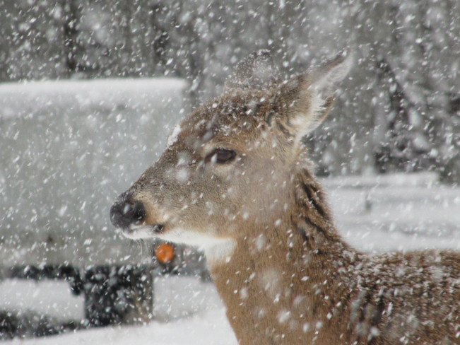 Just Another Pretty Face In The Snow Sherbrooke, Nova Scotia Canada