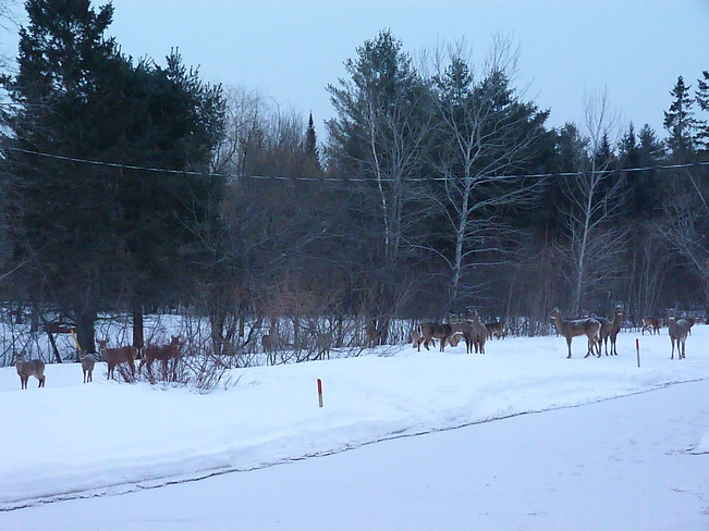 Waiting for breakfast... Fredericton Junction, New Brunswick Canada