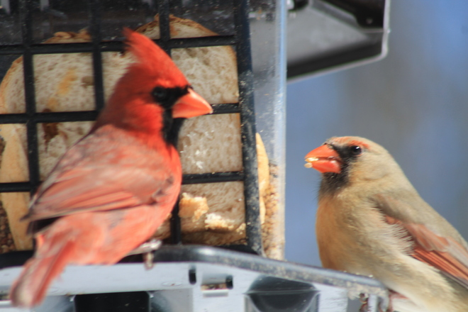 "New :Tweets"" from @mr/mrs/cardinal Aylmer, Ontario Canada"