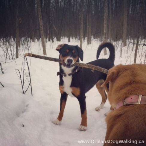 Want to play with my stick? Orleans, Ontario Canada
