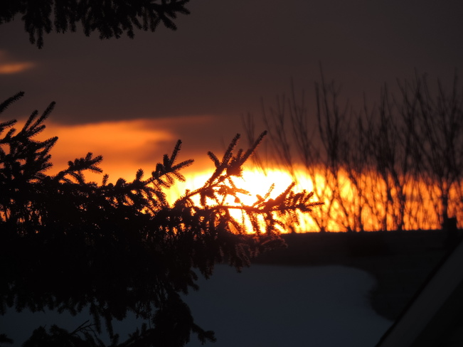 Mid March Sunset Through Trees Orleans, Ontario Canada