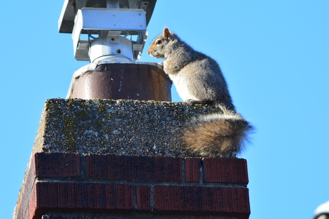 Chimney Inspector! St. Catharines, Ontario Canada