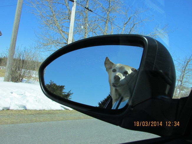 COOPER OUT FOR A DRIVE.. :) Joggins, Nova Scotia Canada