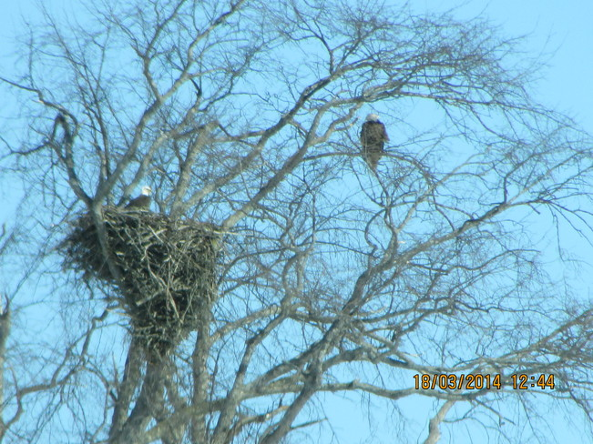 one in the nest.... River Hebert, Nova Scotia Canada