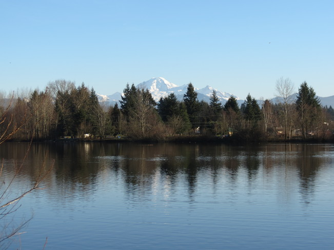 Spring in Jan. Abbotsford, British Columbia Canada