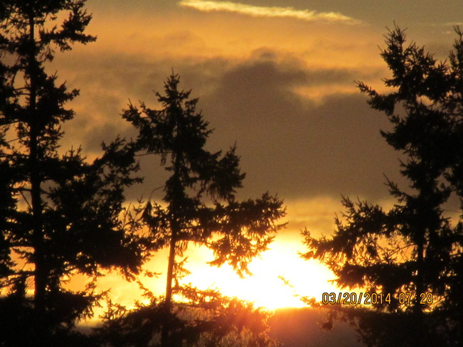 Sunrise through the Cedars Cloverdale, British Columbia Canada