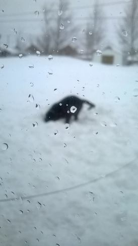 My dog having fun in the snow! Petit Rocher, New Brunswick Canada
