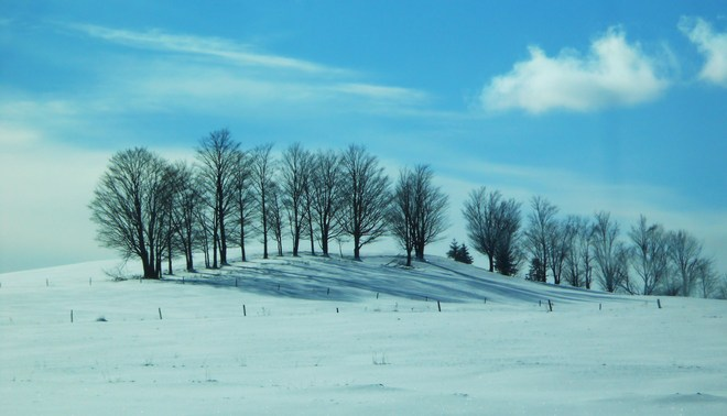 All the trees in a row Stanstead, Quebec Canada