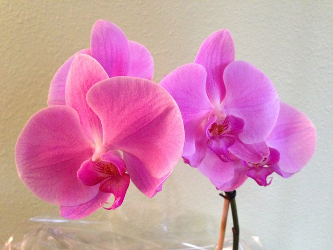 Love orchids! Vancouver, British Columbia Canada