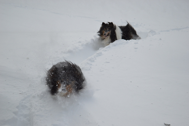 The Dogs are loving the deep snow.