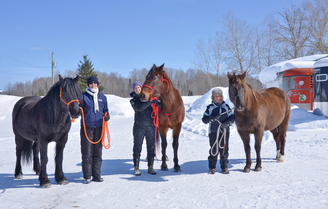 Spring Walk? with the horses Timmins, Ontario Canada
