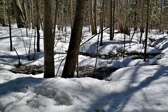 Spring Melt in the Woods Goderich, Ontario Canada
