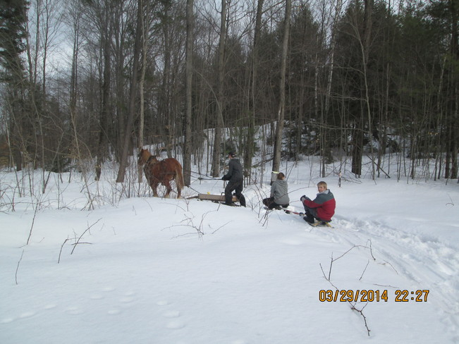 REDNECK KIDS WITH THEIR HORSE DURING MAPLE SYRUP SEASON! Northbrook, Ontario Canada