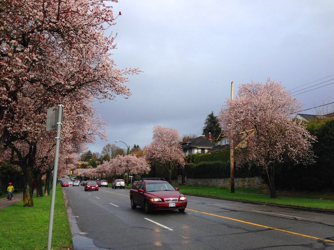 The sight on West 16th Avenue Vancouver, British Columbia Canada