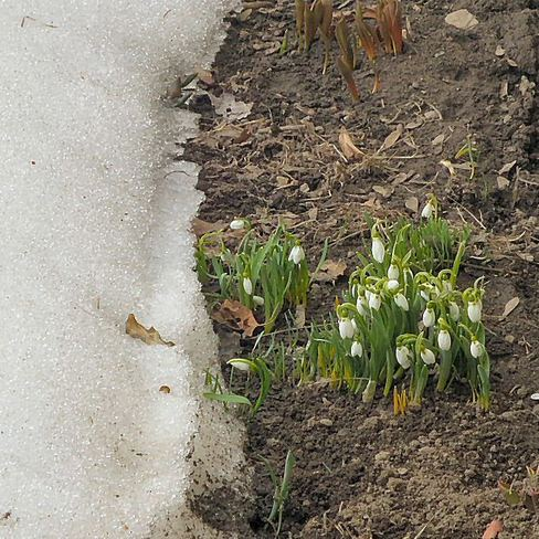 Spring is trying to arrive Nepean, Ontario Canada