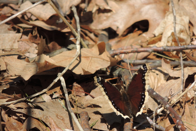 Butterfly, you are finally here! Toronto, Ontario Canada