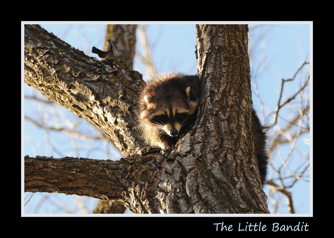 Little Bandit St. Jacobs, Ontario Canada