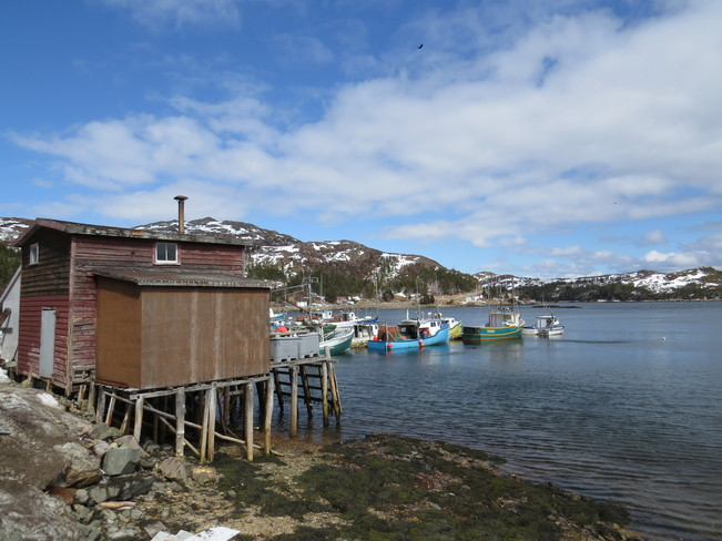 clear saling Baine Harbour, Newfoundland and Labrador Canada
