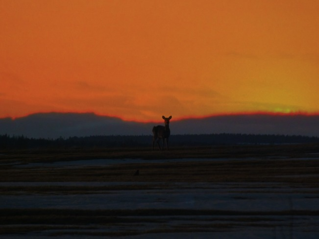 Sunset & Deer Joggins, Nova Scotia Canada