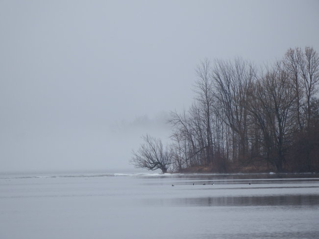 Misty pics. Long Sault, Ontario Canada