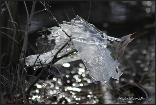 Mother Nature's Ice Scupture Kingston, Ontario Canada