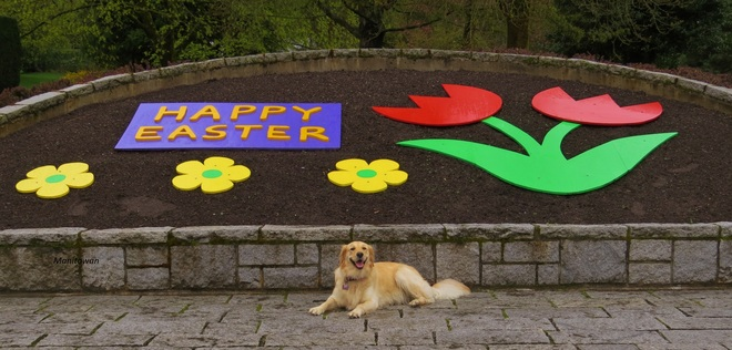 Happy Easter From Shasta At Queens Park New Westminster, British Columbia Canada