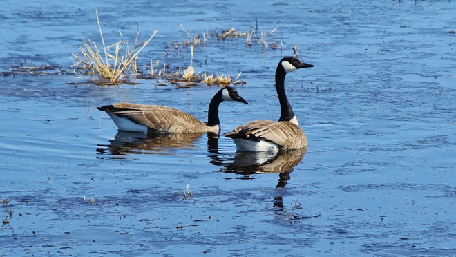 A Lovely Couple! Brandon, Manitoba Canada
