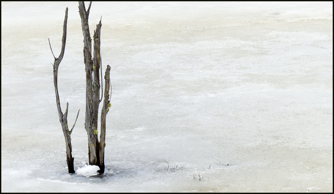 Sheriff Creek, solitary wood on ice. Elliot Lake, Ontario Canada