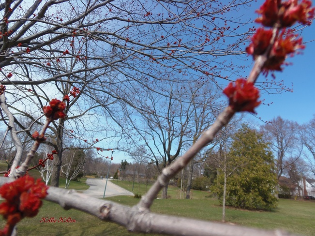Buds and Blooms Welland, Ontario Canada