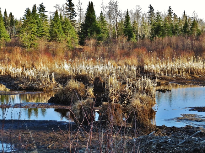 Beautiful wetland being drained. . . North Bay, Ontario Canada