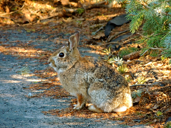 Wascally Wabbit Port Perry, Ontario Canada
