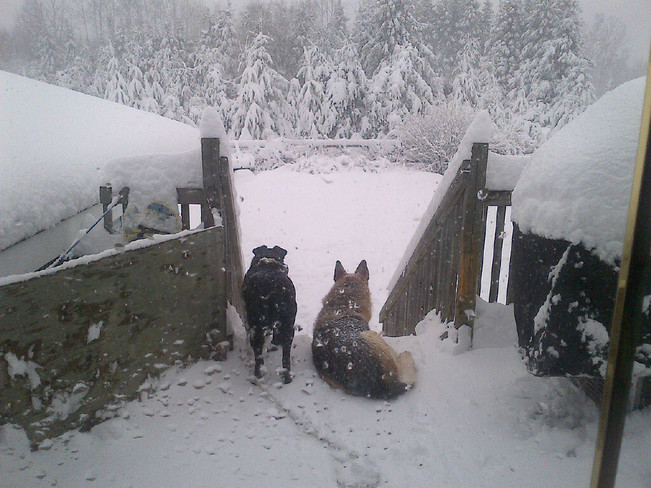 Chloe and Laika watching the snow Thunder Bay, Ontario Canada