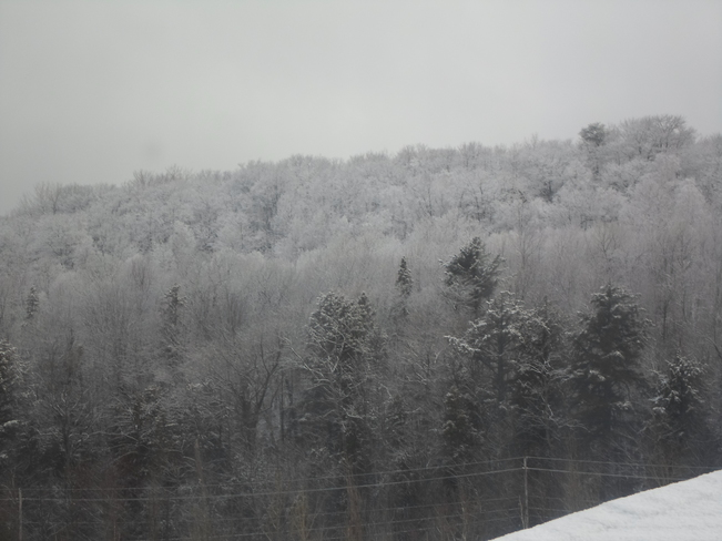 It was a FROSTY MORNing in E.L. Elliot Lake, Ontario Canada
